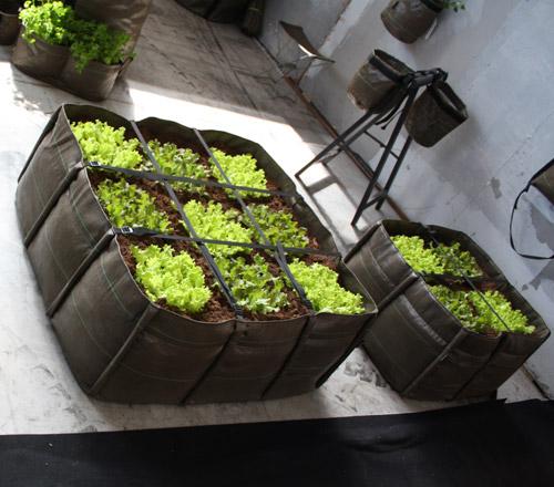 potager design sur une terrasse