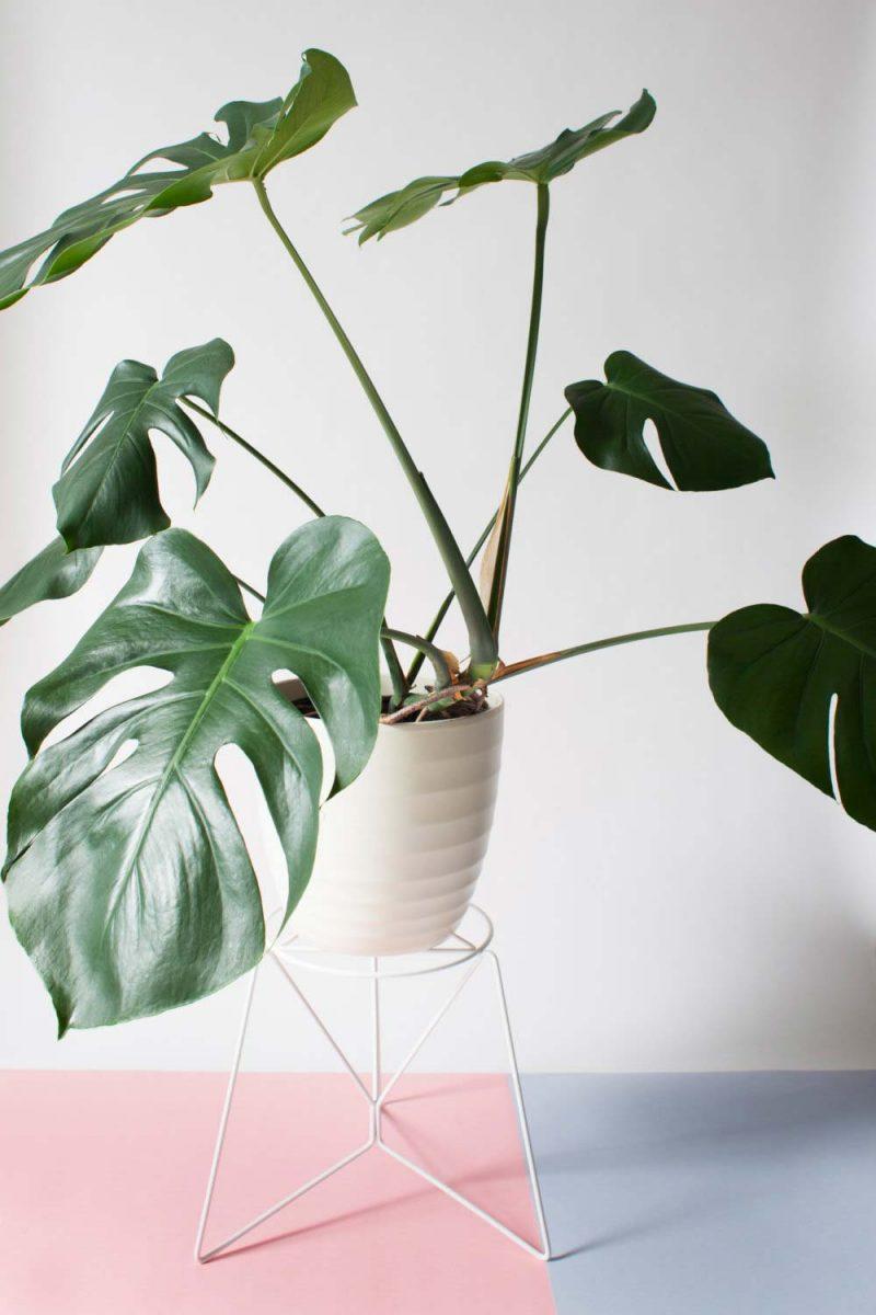 Support pour plante en métal blanc